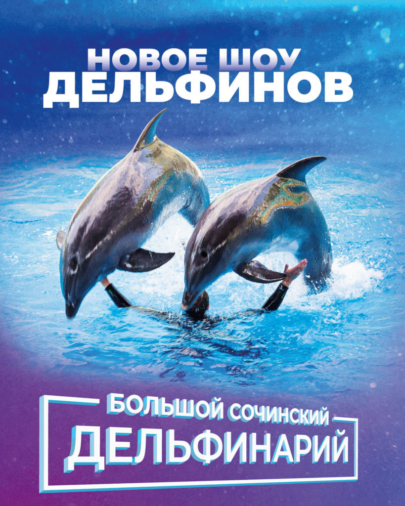 новое шоу дельфинов